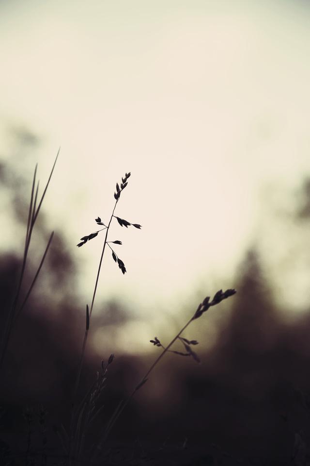 dark spring